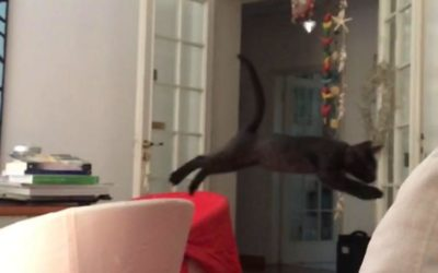 INTERSTELLAR CAT