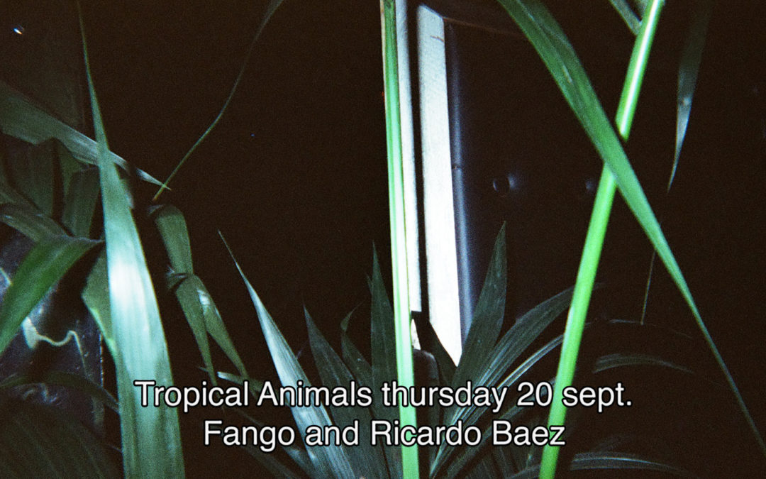 20th September 2018 : Tropical Animals with Fango and Ricardo Baez